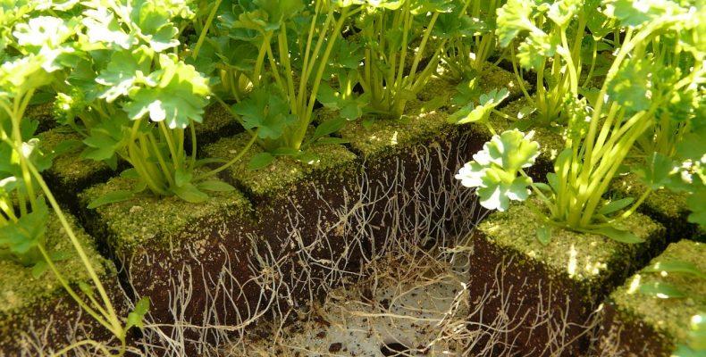 Огород в январе — 5 первоочередных дел