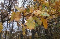 Дуб осенью: фоторепортаж