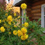 Как оформить дачный дом? Дачная амнистия