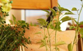 Рассада перца: 7 секретов из личного опыта