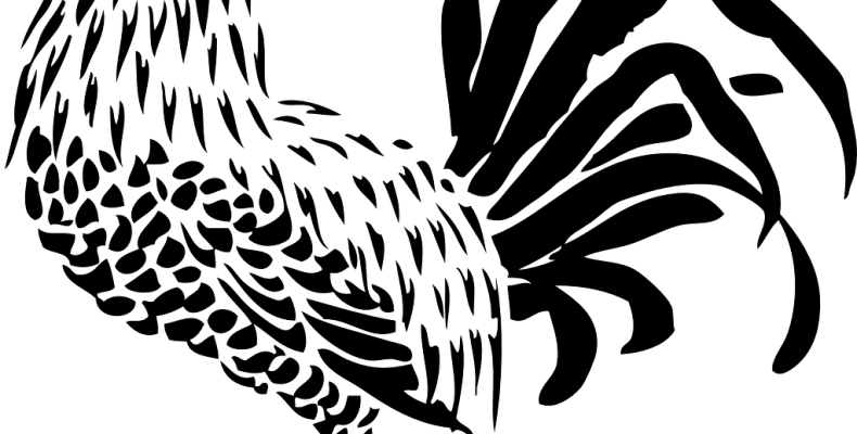 Трафарет (шаблон) петуха: 33 классных картинки