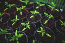 Дренированная почва для рассады в домашних условиях — как сделать?