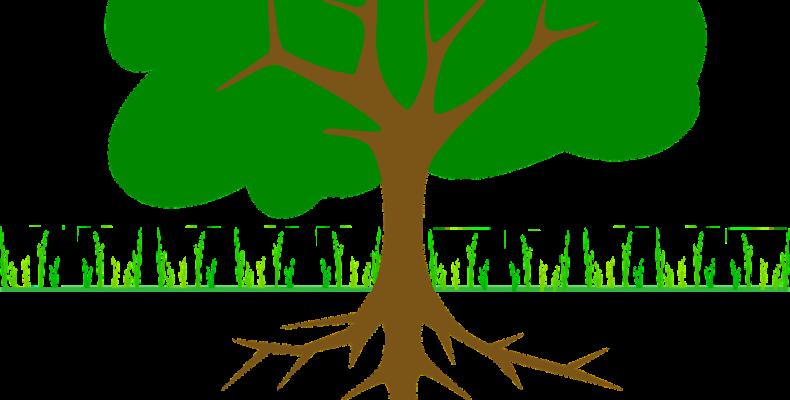 Как правильно посадить сад: участок под старым садом