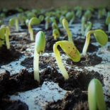 Что можно посеять в январе на рассаду: овощи