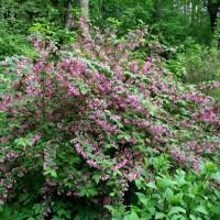 Красивые растения для сада