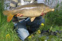 Самый лучший рыбный клев: календарь рыбака на август 2015