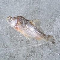 Рыбалка в феврале: прогноз клева на февраль 2015
