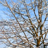 Подготовка сада к зиме – 3самых главных мероприятия