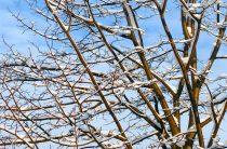 Подготовка сада к зиме — 3самых главных мероприятия
