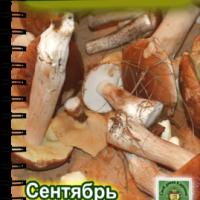 Долгожданный выпуск журнала «Свой домик в деревне» №8-2013