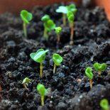 Что посеять в январе на рассаду: цветы