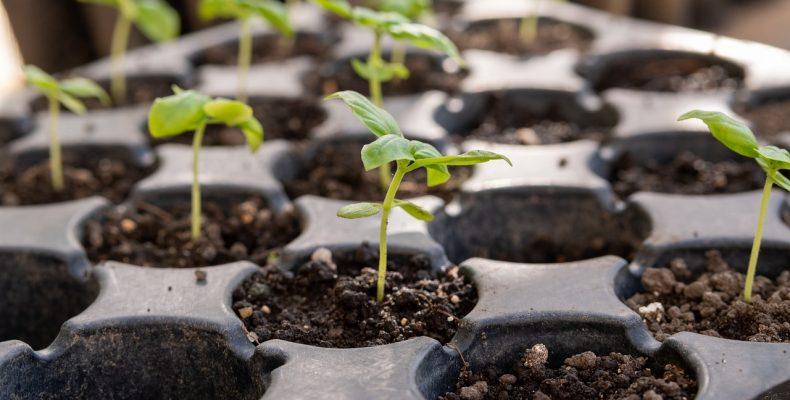 Через сколько дней всходят семена, и что делать, если этого не происходит?