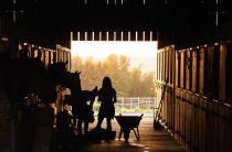 Нормы содержания животных
