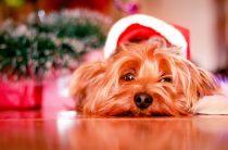 Фото собак на Новый год