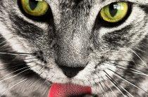 С природой заодно! И кошки, и рыбки — польза для здоровья!