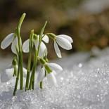 Март: фото природы