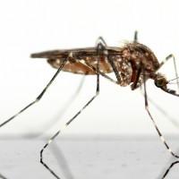 Защита от комаров народными средствами