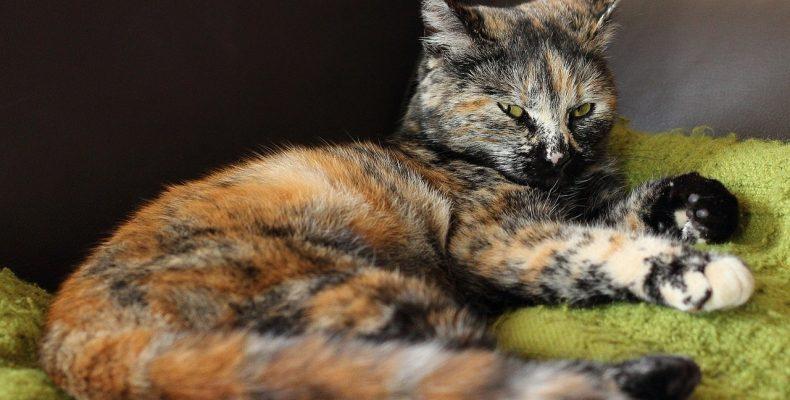 Окрас котов (фото) или Бывают ли трехмастные коты?