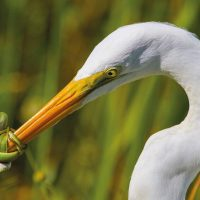 Красивые птицы — 12 фото, итоги конкурса Bird Photographer of the Year 2017