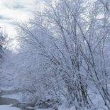 Январь — подготовительный период для огородника