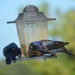 Чем можно и чем нельзя кормить птиц зимой?