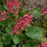 Теневыносливые цветы для тенистого сада