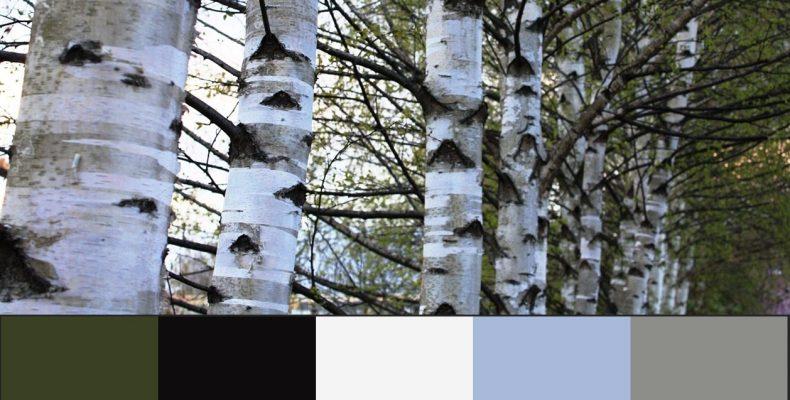 Сочетание серого цвета в интерьере — ищем подсказки у природы!