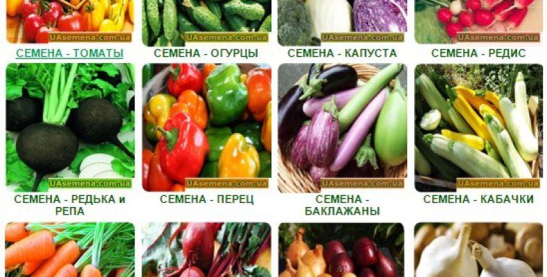 Семена почтой — интернет магазин Украина, наш опыт 2016