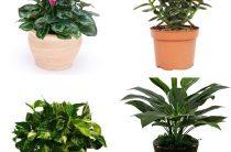 Ядовитые растения для животных: 10 опасных комнатных цветов