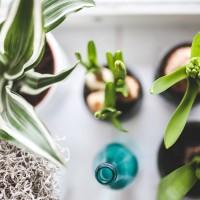 Разведение комнатных цветов — что понадобится?