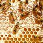 Расход корма пчелами зимой