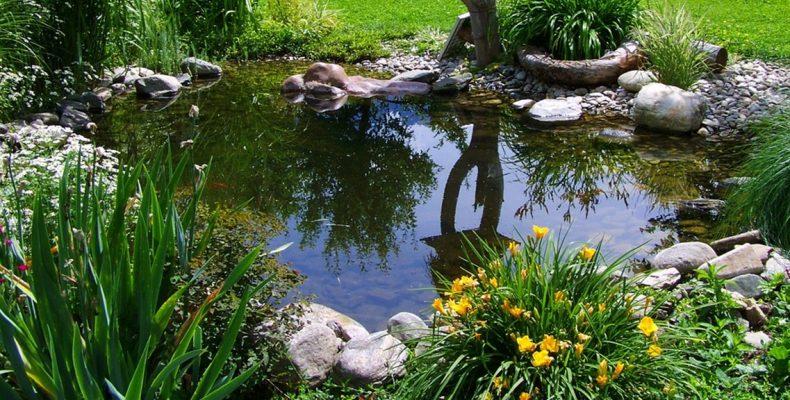 Как запустить рыбу в пруд