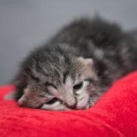 Как назвать кота или кошку? Читатели предлагают клички для котов и кошек!