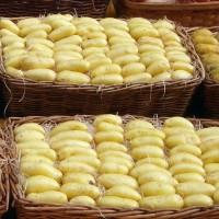 Картофель: сорта-новинки