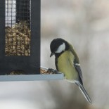 Как кормить птиц зимой?