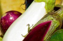 Белые баклажаны — сорта