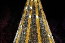 Новогодние елки мира — фото