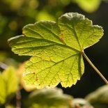 Почему не плодоносит ягодный сад