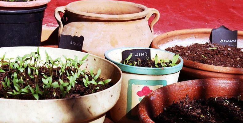 Выращивание рассады: 4 самых распространенных ошибок