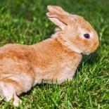 Клички для кроликов. Как назвать кролика — предлагают читатели
