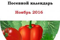 Посевной календарь на ноябрь 2016