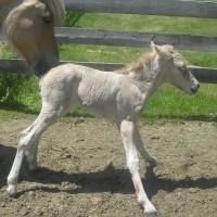 Как назвать лошадь? Клички для лошадей сообщают читатели