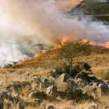 Можно ли жечь траву по закону? Изменения правил противопожарного режима
