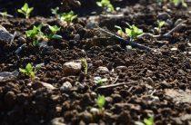 Почва для рассады — подготовка, обеззараживание
