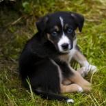 Как назвать собаку? Читатели предлагают клички для собак!