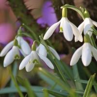 С 8 Марта! Фото, цветы, весна!