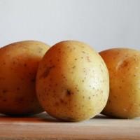Сорта картофеля для Центрально-Черноземного региона