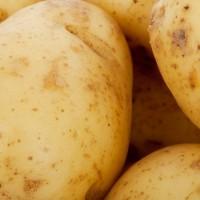 Сорта картофеля для Дальневосточного региона