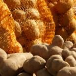 Сорта картофеля для Нижневолжского региона