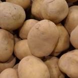 Сорта картофеля для Северо-Западного региона